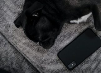 Best Pet Apps for Android Device in 2021
